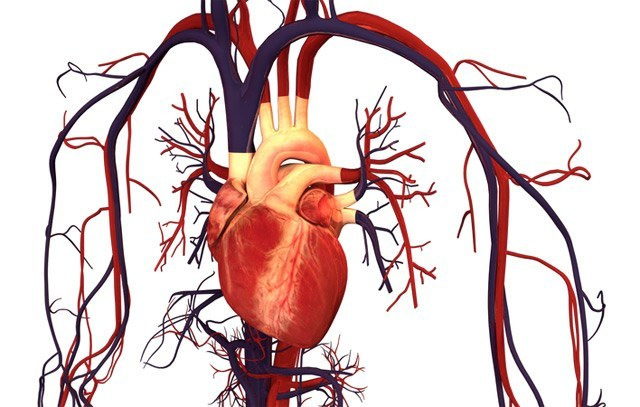 Srce in ožilje