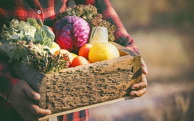 Košara domače zelenjave